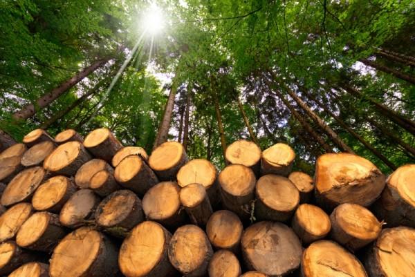 energia senza emissioni biomasse