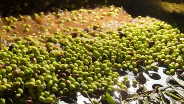 energia pulita olive