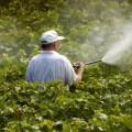 pesticidi salute