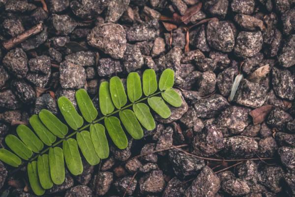 specie vegetali estinte