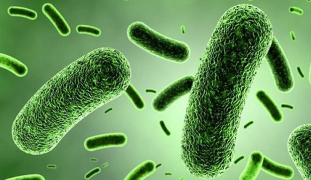 microbi co2
