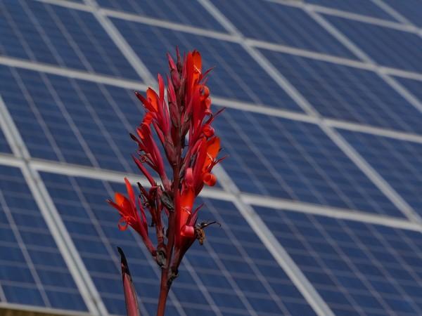 costo energia solare lcoe fotovoltaico