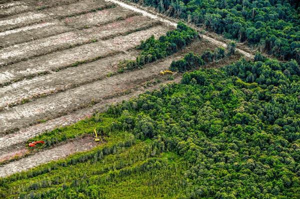 deforestazione nel mondo