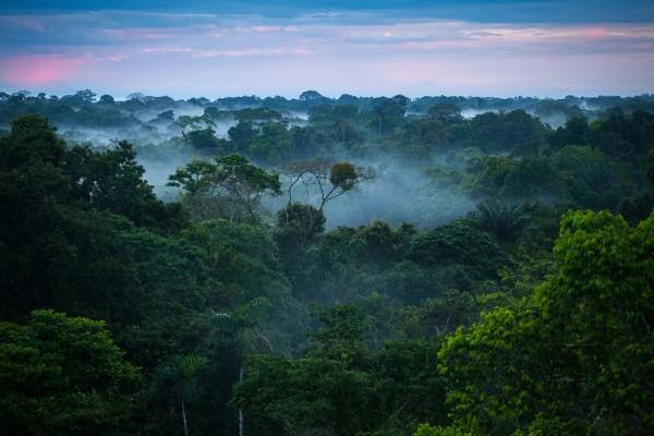 Proteggere le foreste