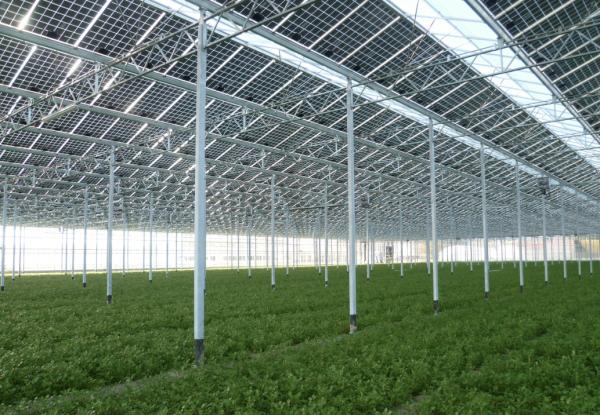 energia pulita agricoltura