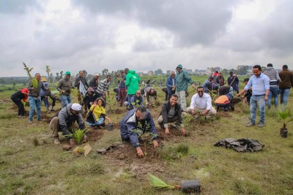 etiopia alberi