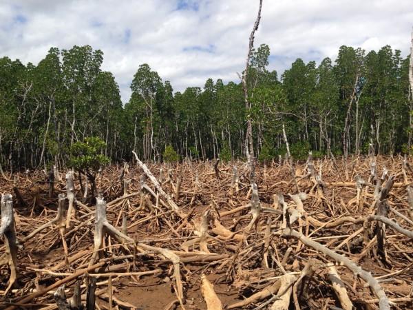 riforestazione deforestazione