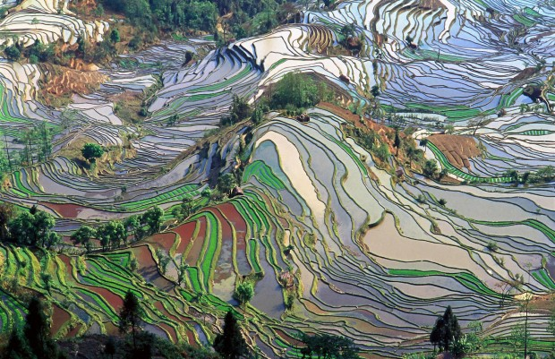 report IPCC agricoltura allevamento