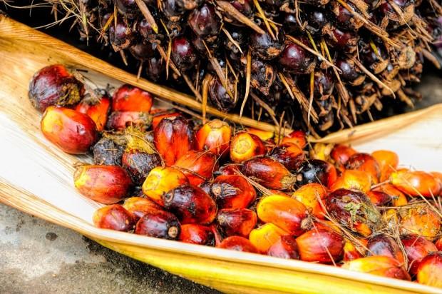 olio di palma malesia