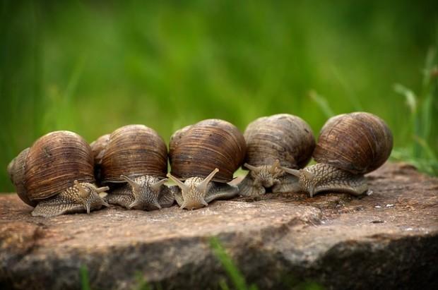Biodiversità, rapporto IUNC