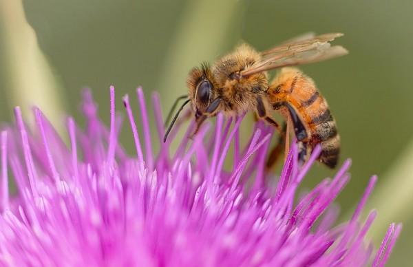 insetticidi dannosi api