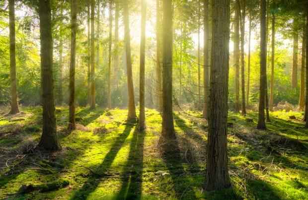 tutela foreste