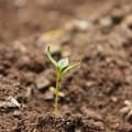 Tutela del suolo