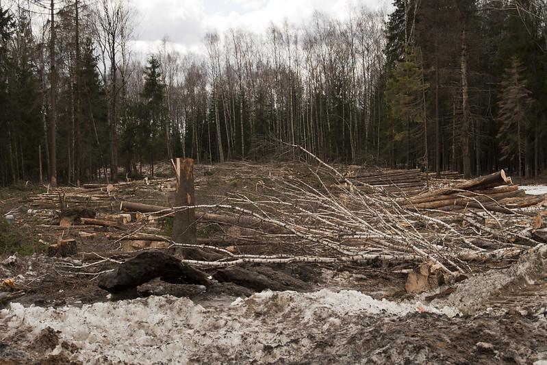 crimine ambientale