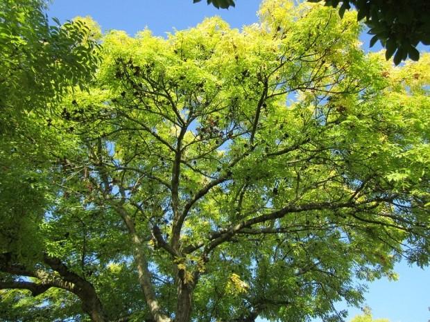 Giornata nazionale degli alberi