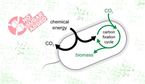 batteri mangia CO2