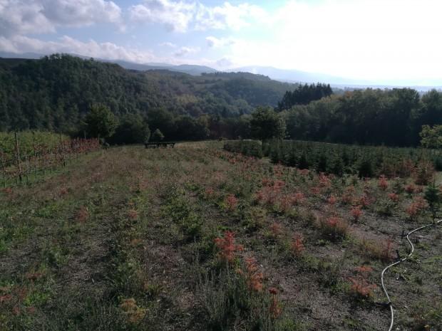 Credit: Lapo Azzini - Dipartimento di Scienze e Tecnologie Agrarie, Alimentari, Ambientali e Forestali (DAGRI) dell'Università di Firenze.