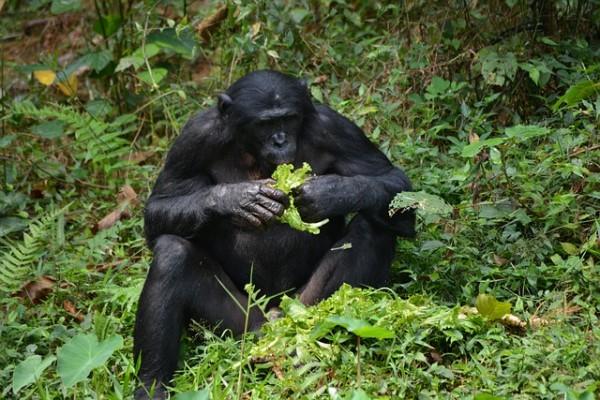 Foresta del Congo