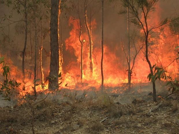 incendi australiani