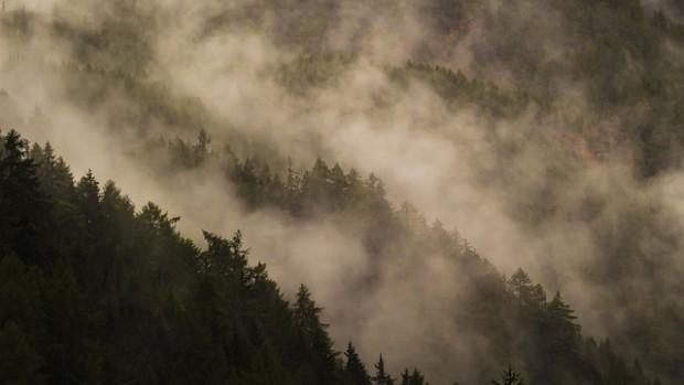 Pozzi di carbonio