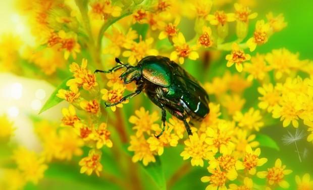 insetti impollinatori