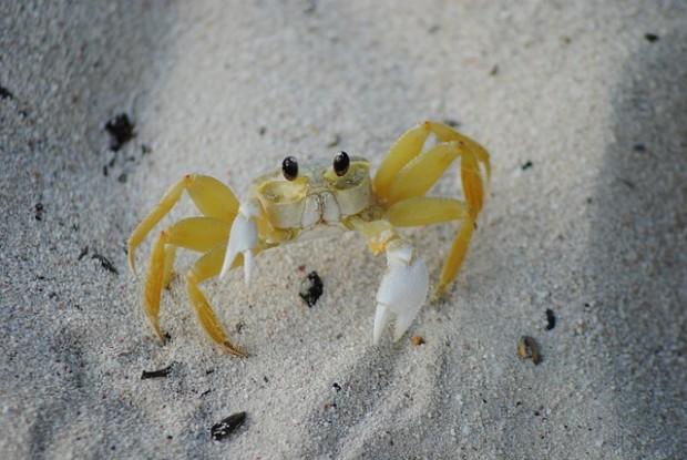 tutela degli oceani