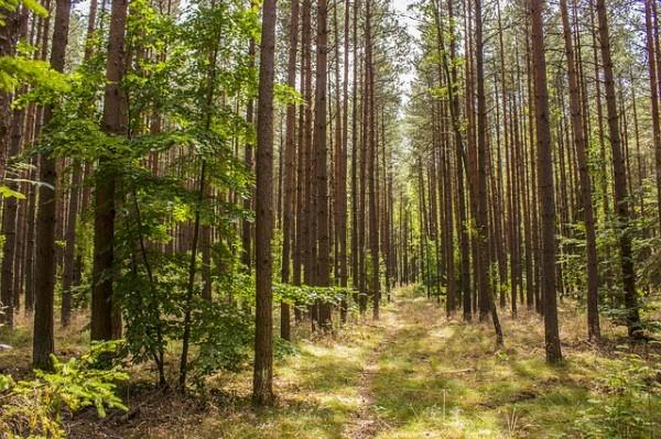 stato delle foreste