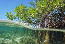 foreste di mangrovie