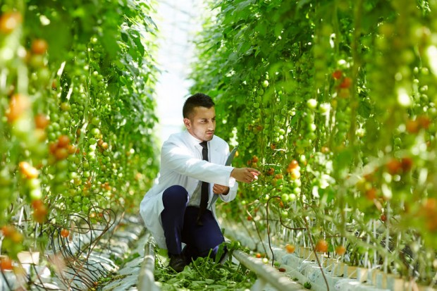 filiere agroalimentari sostenibili