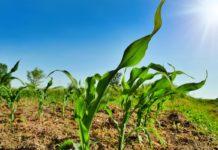 fertilizzanti azotati