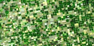 agricoltura ad alto rendimento
