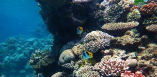 biodiversità marina