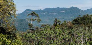 copertura forestale