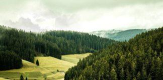 Strategia per la biodiversità