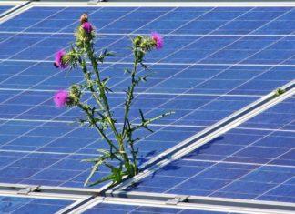 incentivi rinnovabili
