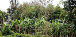 sistemi agroforestali