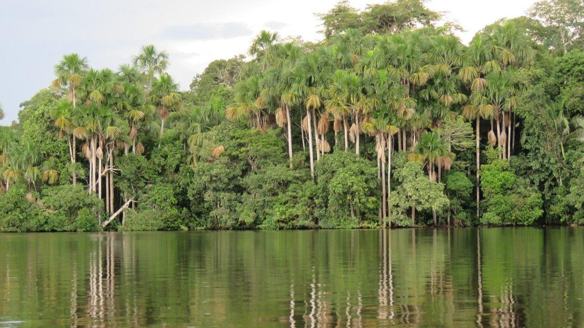 Amazzonia peruviana