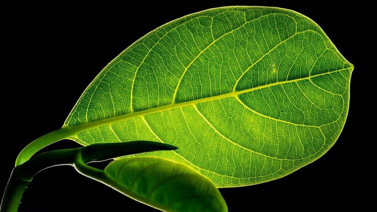 Conversione di anidride carbonica