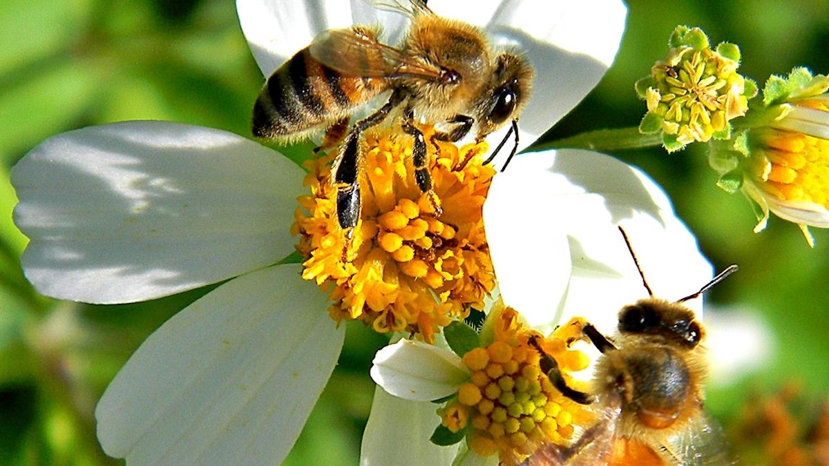 api native