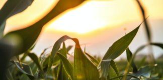 Comitato Scientifico Agrifood