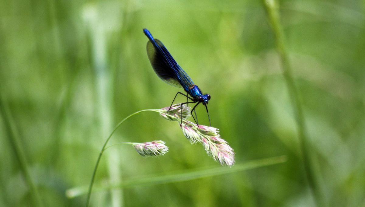 pesticidi insetti