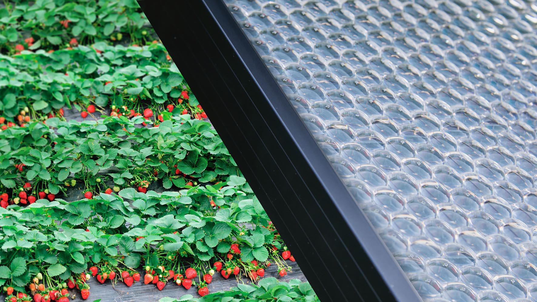 Insolight pannelli solari
