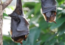 Biodiversità: dagli habitat degradati arriveranno nuove pandemie devastanti