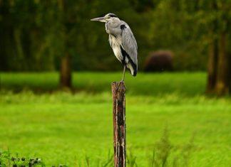 Biodiversità a rischio: l'allarme dell'UE, l'80% degli habitat è degradato