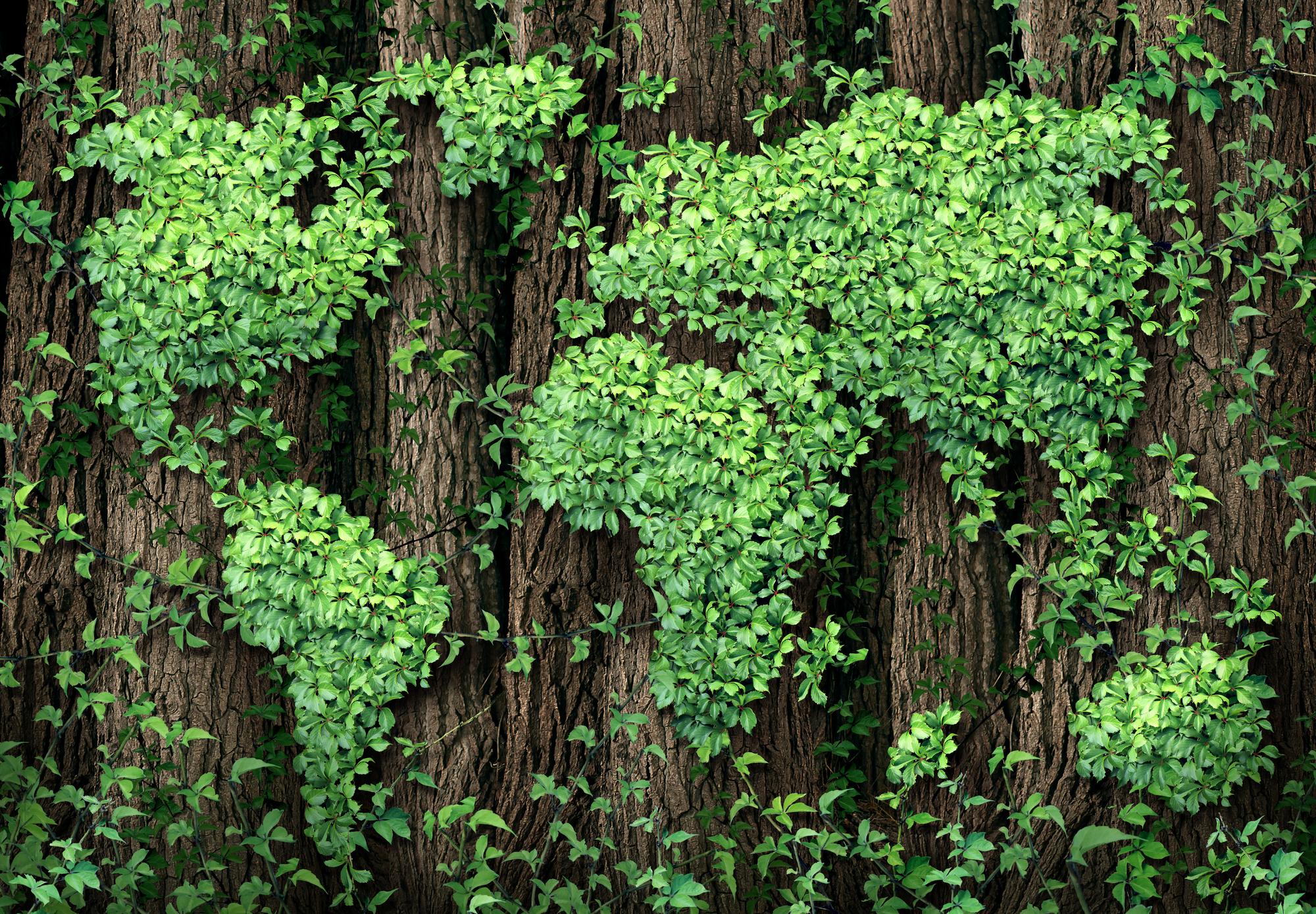 imprese green