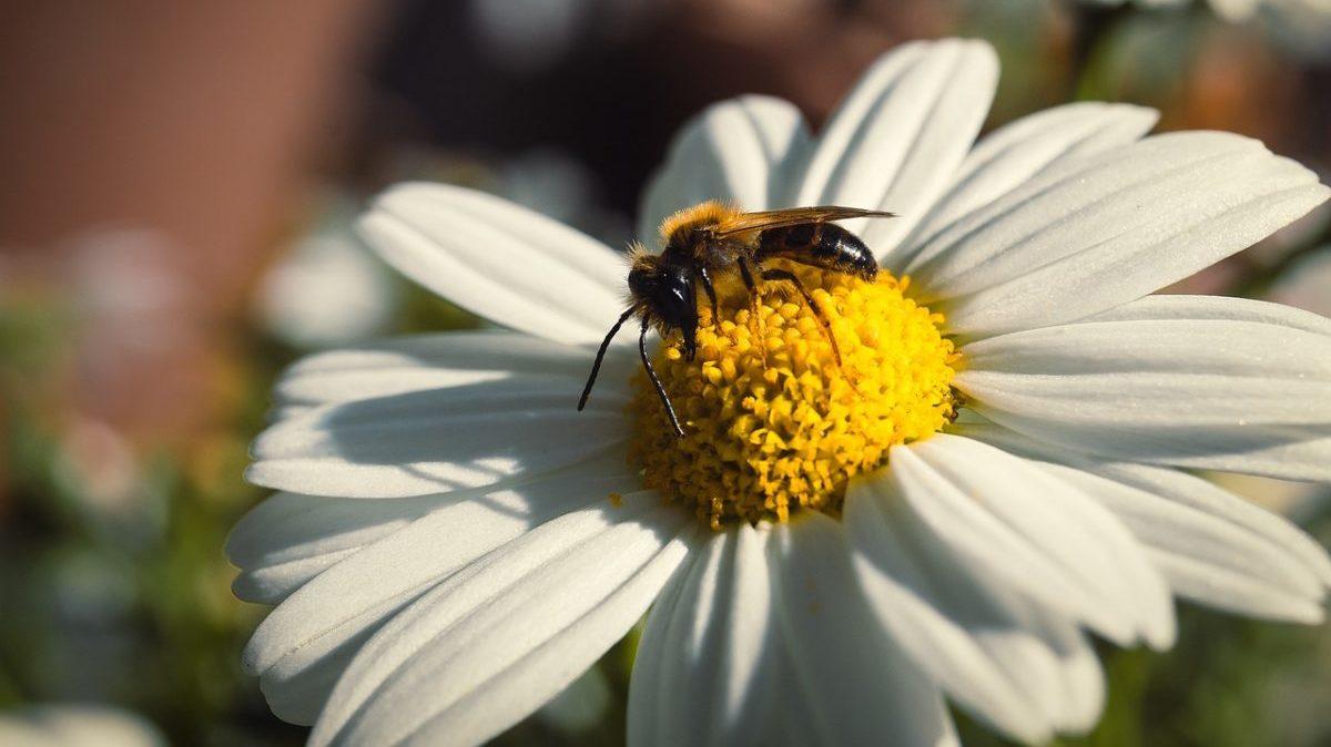 Pesticidi: primi passi dell'EFSA verso la valutazione integrata