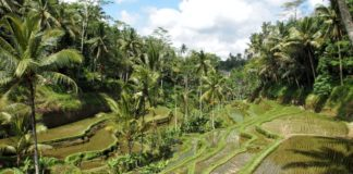 Deforestazione: allarme foreste tropicali, resiste solo il Congo
