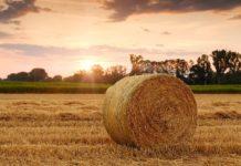 rifiuti radioattivi agricoltura