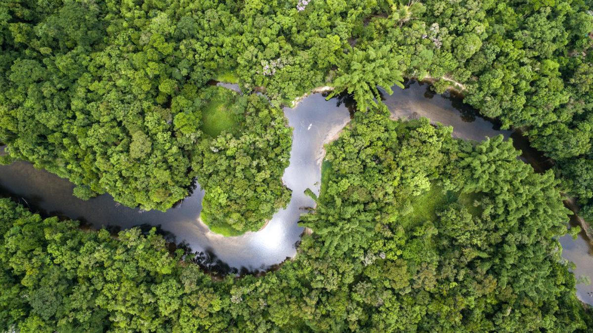 Amazzonia: la foresta pluviale ormai è un contributore netto di gas serra