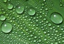 Idrogeno verde: Orsted prepara un impianto da 1 GW nel North Sea Port